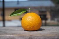 #80 なるとオレンジの季節 - チッキィのおいしい淡路島