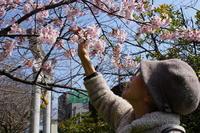 桜見学~地元の桜は最高です~ - ときの杜『散策日誌』(穂の香・あや音・燈いろ・ゆめのき保育園)