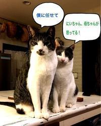 にゃんこ劇場「兄貴は辛いよ」 - ゆきなそう  猫とガーデニングの日記