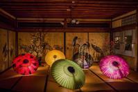 長浜盆梅 展×大山の大献灯和傘灯り - 鏡花水月