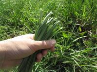 チヂミ野焼きお雛様 - 南阿蘇 手づくり農園 菜の風