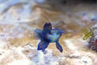 板橋区立熱帯環境植物館:東南アジアの海~美しいサンゴの森~【前編】 - 続々・動物園ありマス。