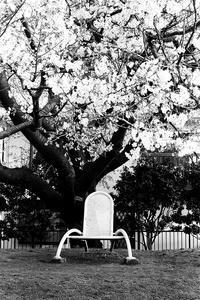 さくらの樹の下で。 - Ippo Ippo
