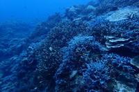 20.3.28大外れ!天気予報 - 沖縄本島 島んちゅガイドの『ダイビング日誌』