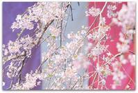 花の旅 - 366日の恋するカメラ