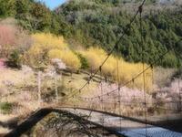 山茱萸  2奈良県 - ty4834 四季の写真Ⅱ