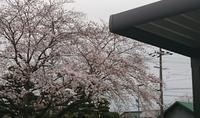 桜とG-1ss。。。。 - 岐阜県 門塀・庭・車庫 エクステリア専門店アーステック