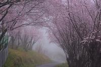 雨の日の花の里西吉野 - 峰さんの山あるき