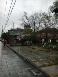 近場で桜🌸 - 京都西陣 小さな暮らしから、田舎暮らしへぼちぼち・・・