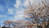 時期が来れば桜は咲く - まずは何から始めよう?     *日々の暮らし日記*