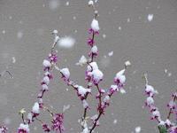 雪が降りました❆ - Magnolia Lane 2