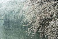 Tombe la neige3月29日(日)6866 - from our Diary. MASH  「写真は楽しく!」