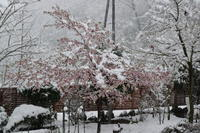 雪降りました~⛄ - みい写日記☆
