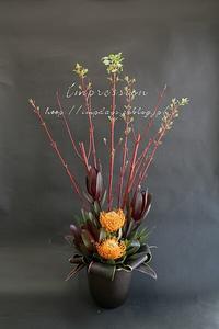 定期装花から芽ぶきのサンゴミズキ - Impression Days