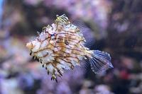 板橋区立熱帯環境植物館:東南アジアの海~美しいサンゴの森~【後編】 - 続々・動物園ありマス。