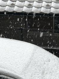 3月最後の日曜日は雪! - 埼玉でのんびり暮らす