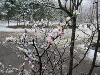 三月去るにも雪降る - くぬぎの森の物語/鵜澤 廣