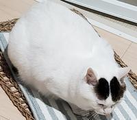 うちの子記念日 - 素人木工雑貨と犬猫日記