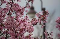 赤い花ー3月ー2 - ナイン9の写真日記