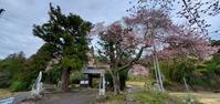 常隆寺の桜@福島県棚倉町 - 963-7837