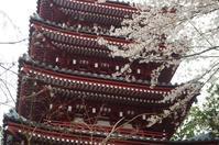 本土寺の春 - ひとときのやすらぎをあなたに