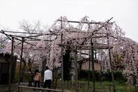 千手院まで散歩 - じじ & ばば の Photo blog