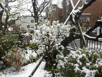 春の雪 - ないものを あるもので