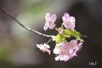 春に咲く祝福の光 * - 虹の架け橋  ~天使*精霊たちとともに~