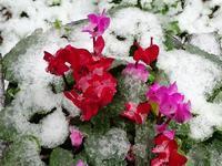 季節外れの雪 - 花と葉っぱ