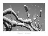 雪綿帽子 - Minnenfoto