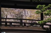 川越喜多院 - belakangan ini