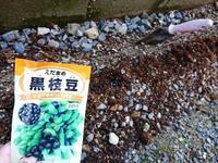 えだまめ 種まき - NATURALLY