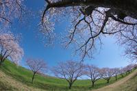 広々とした空へ - Today's one photograph