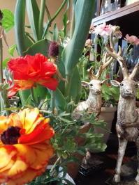 コロナと週末今年は花粉症がいない不思議 - 真夜中の植物園