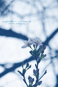 Flower Photograph #18 - psyuxe*旅とアトリエのあいだ