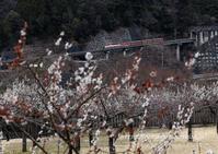 大井川鐵道井川線 - きょうはなに撮ろう