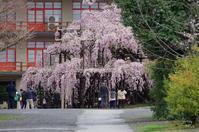天理市豊田町013 - ぶらり記録 2:奈良・大阪・・・