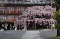 天理市豊田町015 - ぶらり記録 2:奈良・大阪・・・