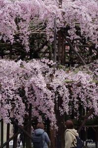 天理市豊田町017 - ぶらり記録 2:奈良・大阪・・・