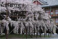 天理市豊田町019 - ぶらり記録 2:奈良・大阪・・・