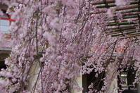 天理市豊田町022 - ぶらり記録 2:奈良・大阪・・・