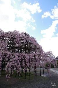 天理市豊田町025 - ぶらり記録 2:奈良・大阪・・・