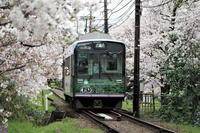 嵐電、桜のトンネル - Taro's Photo