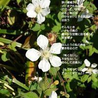 決心 - 陽だまりの詩