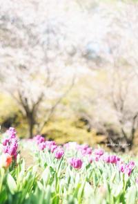 4月 - jumhina biyori*
