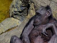 女の子達の午後[天王寺動物園] - a diary of primates