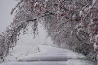 雪の浅川 - kuroroの Blog