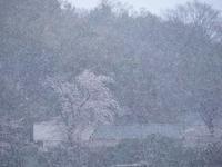 春の淡雪 - 光の音色を聞きながら Ⅴ