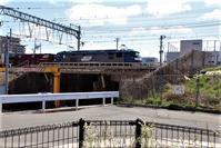藤田八束の鉄道写真@春の西宮、公園にユキヤナギが綺麗に咲きました。ユキヤナギの美しさと鉄道写真・・・ガーデニングと鉄道写真 - 藤田八束の日記