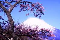 令和2年3月の富士(23)平和公園の富士 - 富士への散歩道 ~撮影記~